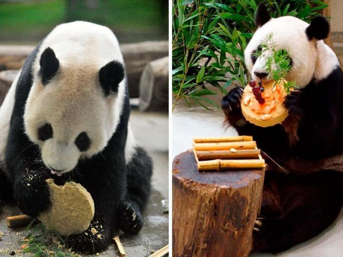 Десерт для панды