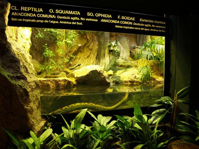 анаконда в зоопарке