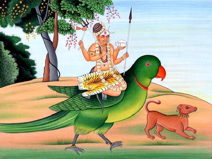 Виды-попугаев-Описание-и-образ-жизни-различных-попугаев-4