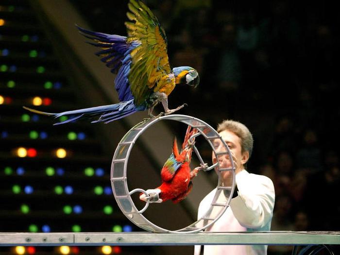 Виды-попугаев-Описание-и-образ-жизни-различных-попугаев-3