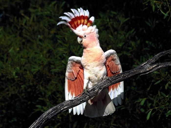 Виды-попугаев-Описание-и-образ-жизни-различных-попугаев-14