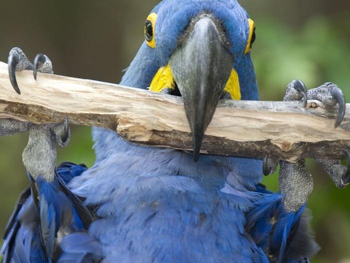 Виды-попугаев-Описание-и-образ-жизни-различных-попугаев-2