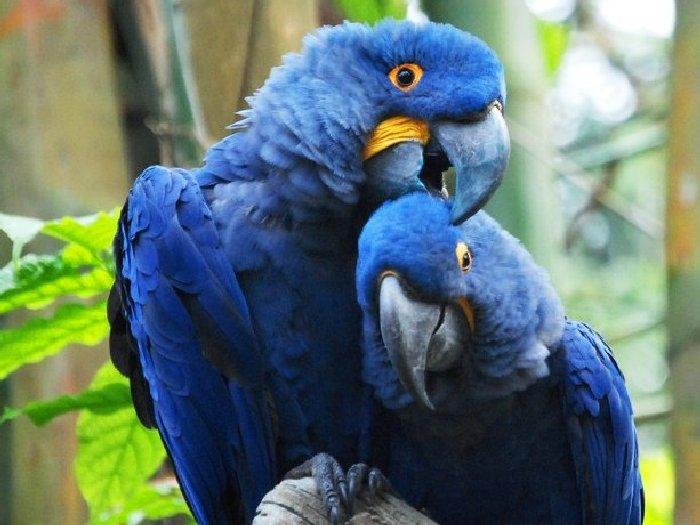 Виды-попугаев-Описание-и-образ-жизни-различных-попугаев-1