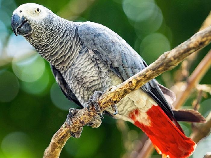 Виды-попугаев-Описание-и-образ-жизни-различных-попугаев-15