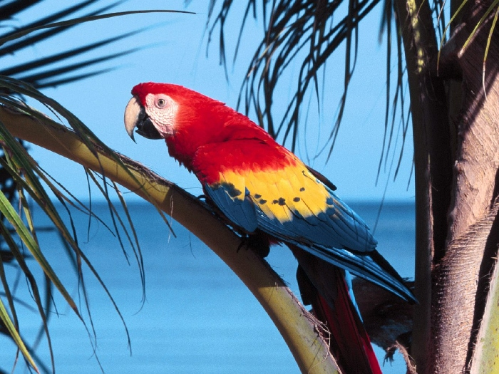 Виды-попугаев-Описание-и-образ-жизни-различных-попугаев-12