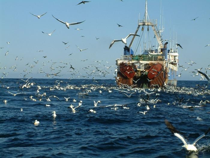 Альбатрос-птица-Описание-образ-жизни-и-виды-альбатроса-7