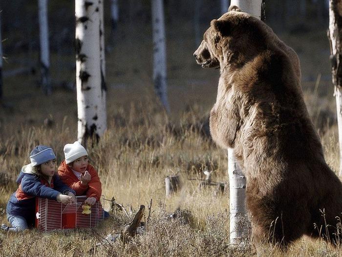 Медведь описание. Где живут медведи