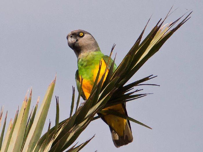 Виды-попугаев-Описание-и-образ-жизни-различных-попугаев-17
