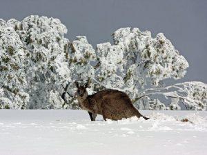 Горнолыжные курорты Австралии