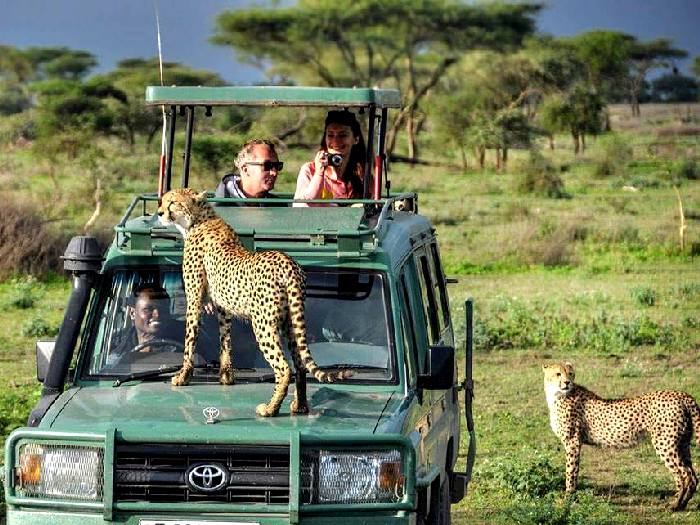 Интервью у леопарда