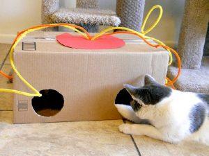Игрушки для домашних котят