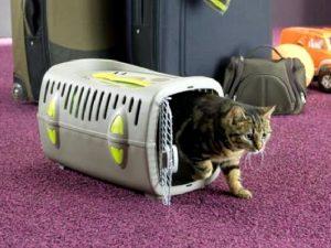 Как перевозить кошек