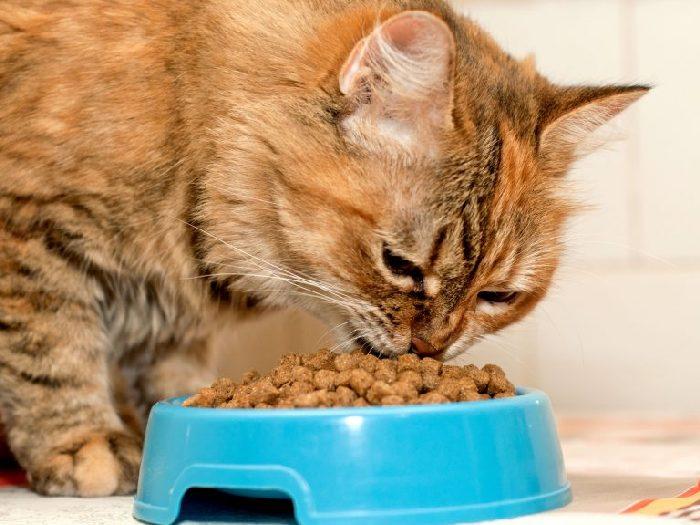 Каким должен быть корм для кошек