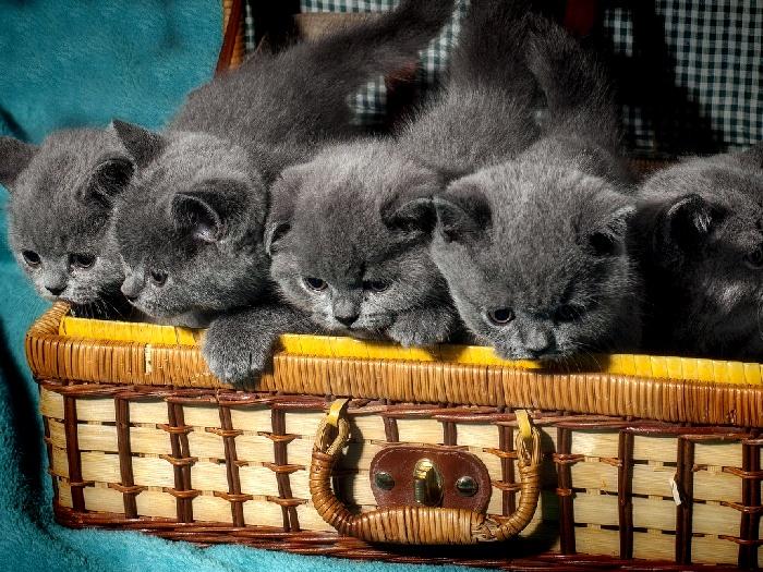 Правильный уход за котёнком