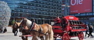 Виды лошадей фото и описание и название