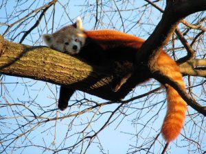 Спит не деревьях