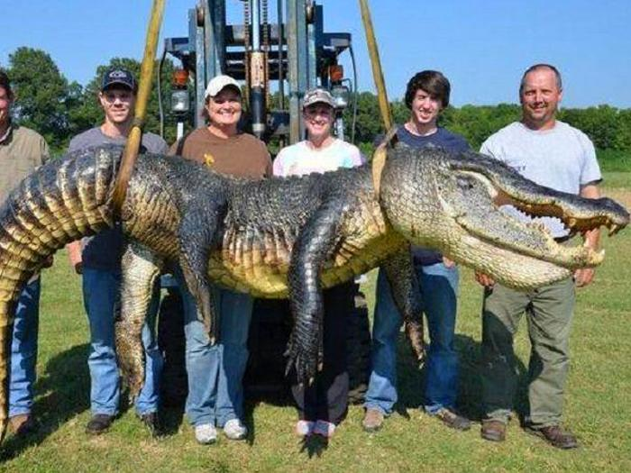 Самый большой аллигатор