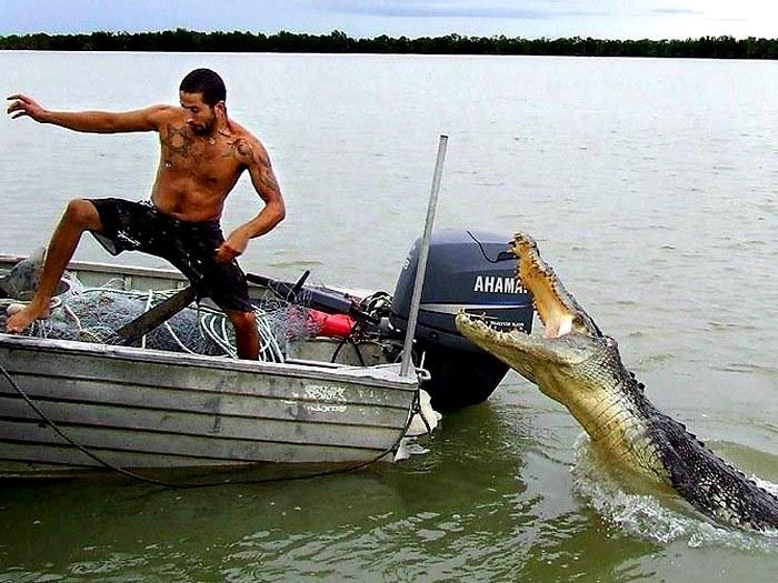 Атака аллигатора