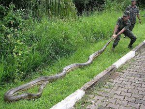 Как военные змею ловили…