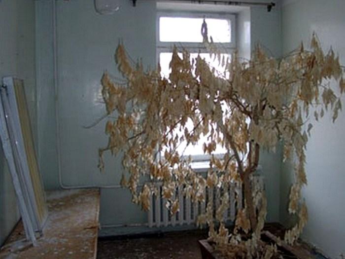 Оставленные квартиры