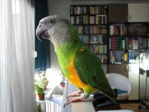 Попугай долгожитель