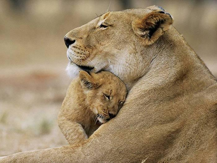 Львица с львёнком