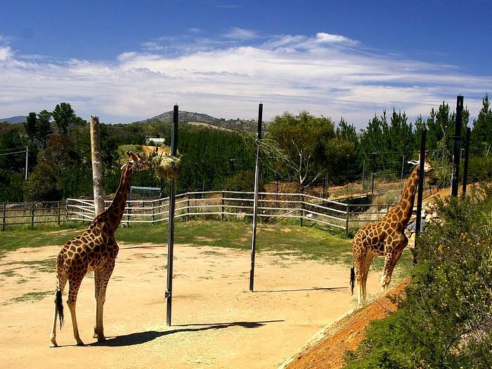 Национальный зоопарк и аквариум