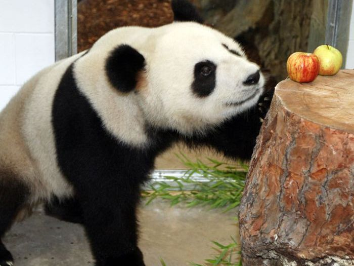 Фрукты для панды
