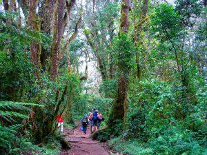 Джунгли Килиманджаро