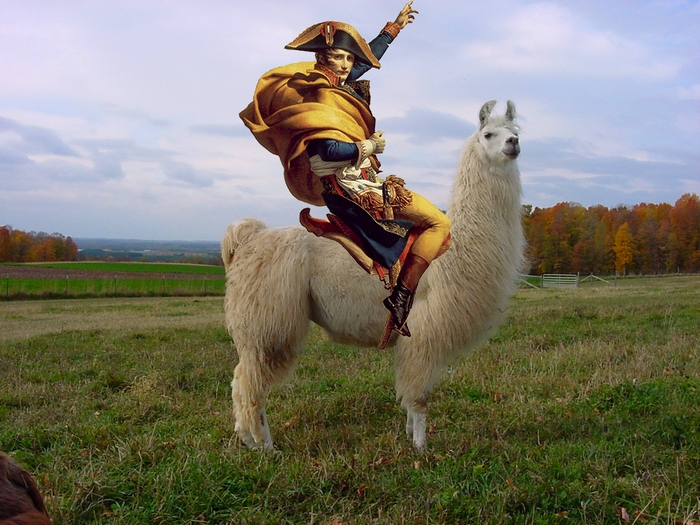 Знатный всадник на ламе
