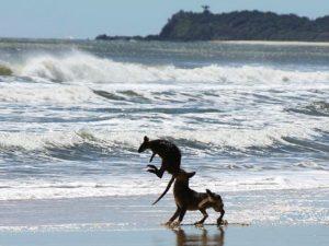 Догнал кенгуру
