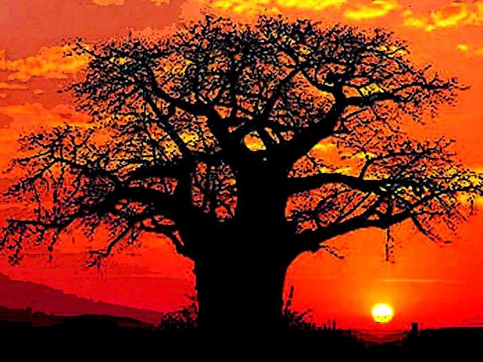 Символ Африки баобаб