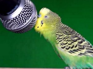 Соло для попугая