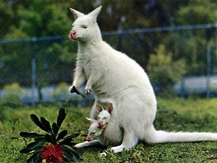 Белый мама