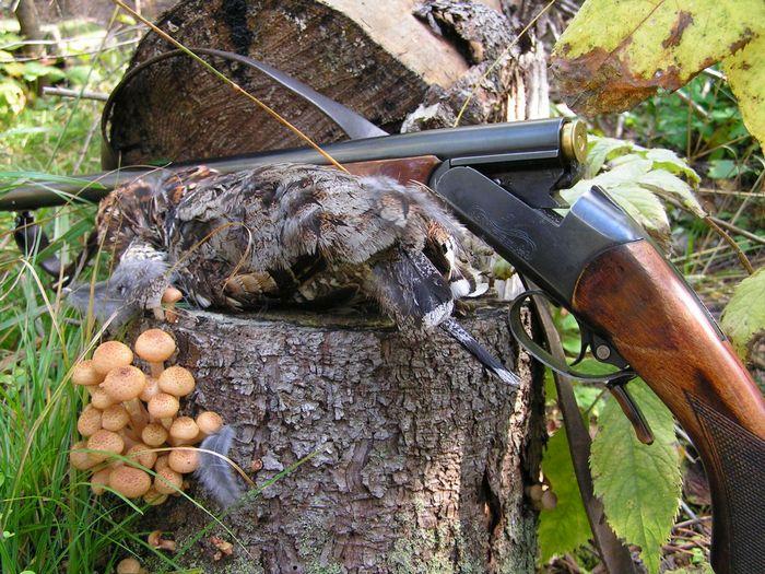 Охотничье ружье ИЖ-18
