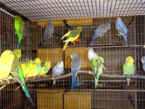 Свободу попугаям