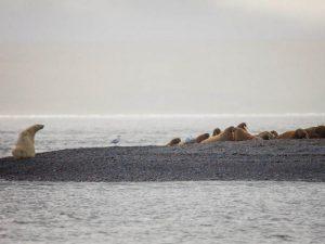 Острова в море Лаптевых