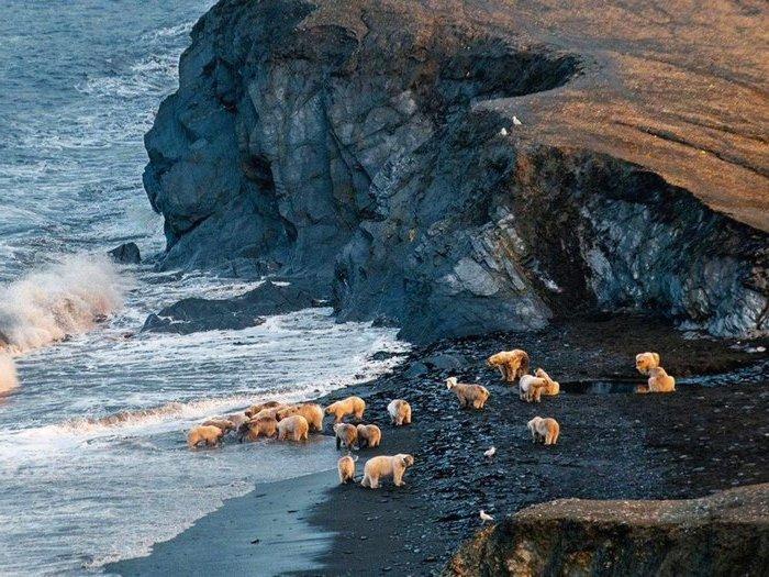 Вотчина белых медведей