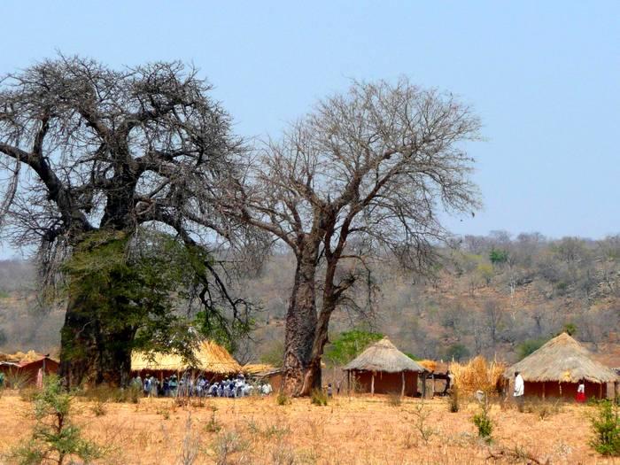 Деревня под баобабами в Зимбабве