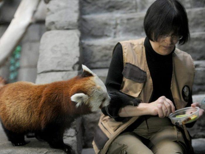 Обед для панды