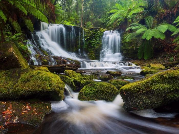 Национальный парк Маунт Филд