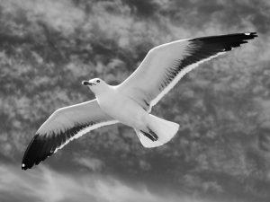 Альбатросовые