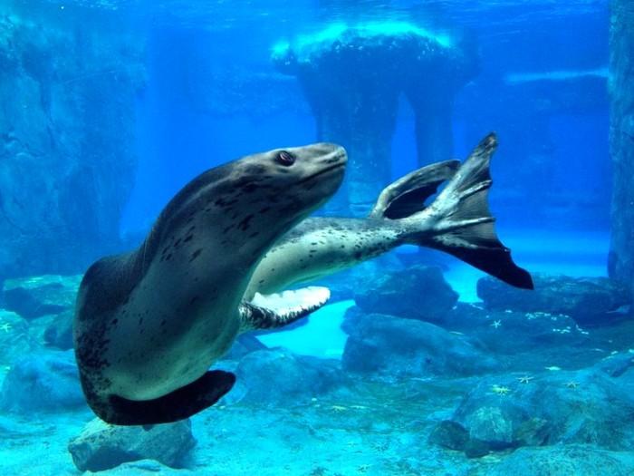 Хитрый морской зверь