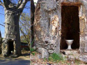 Био баобабо-туалет