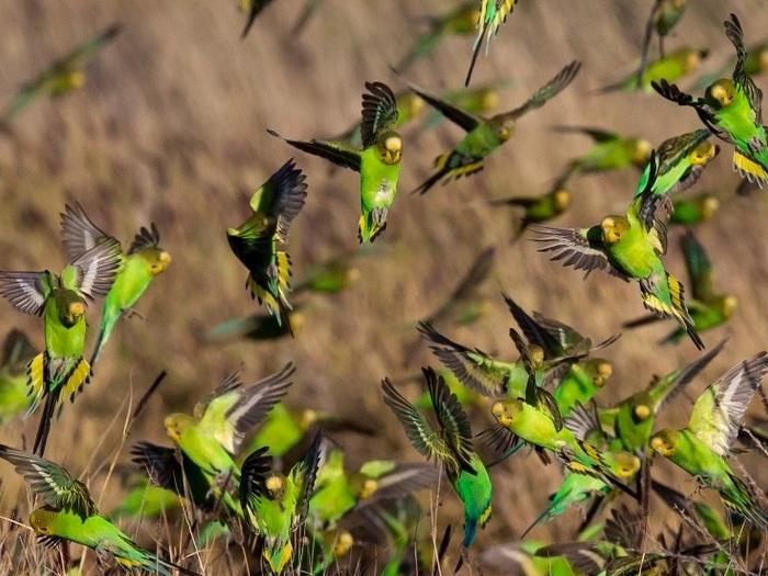 Молодые попугайчики резвятся