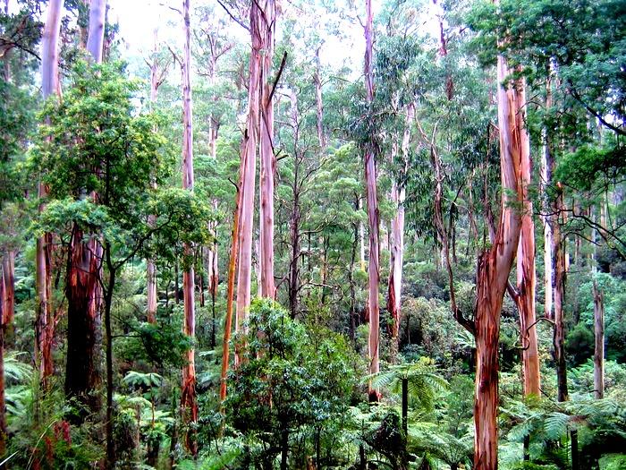 Джунгли по австралийски
