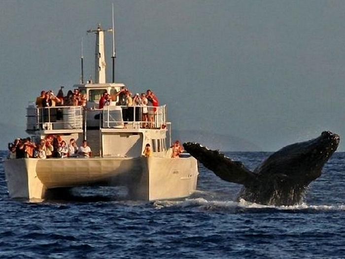 Съемки синего кита