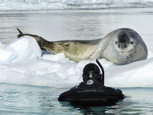 Интересные факты о морском леопарде. 10-ть фактов о морских леопардах