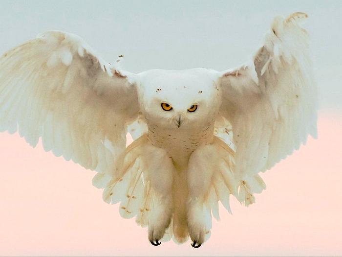 Большая хищная птица