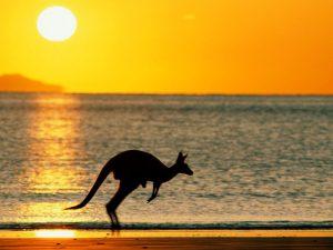 Кенгуру на берегу